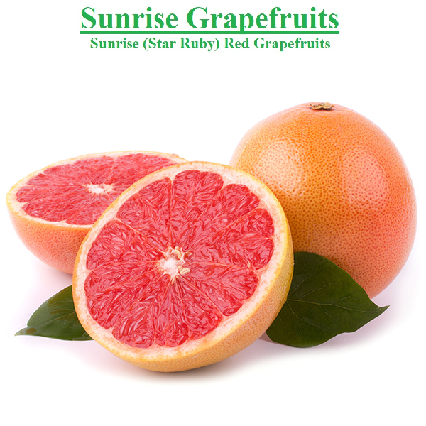 Planet Israel - Fresh Fruits | Fresh Citrus | Fresh Vegetables | Concentrated Pure Fruit Juice - Fresh Sunrise (Star Ruby) Red Grapefruit / Grapefruits from Israel