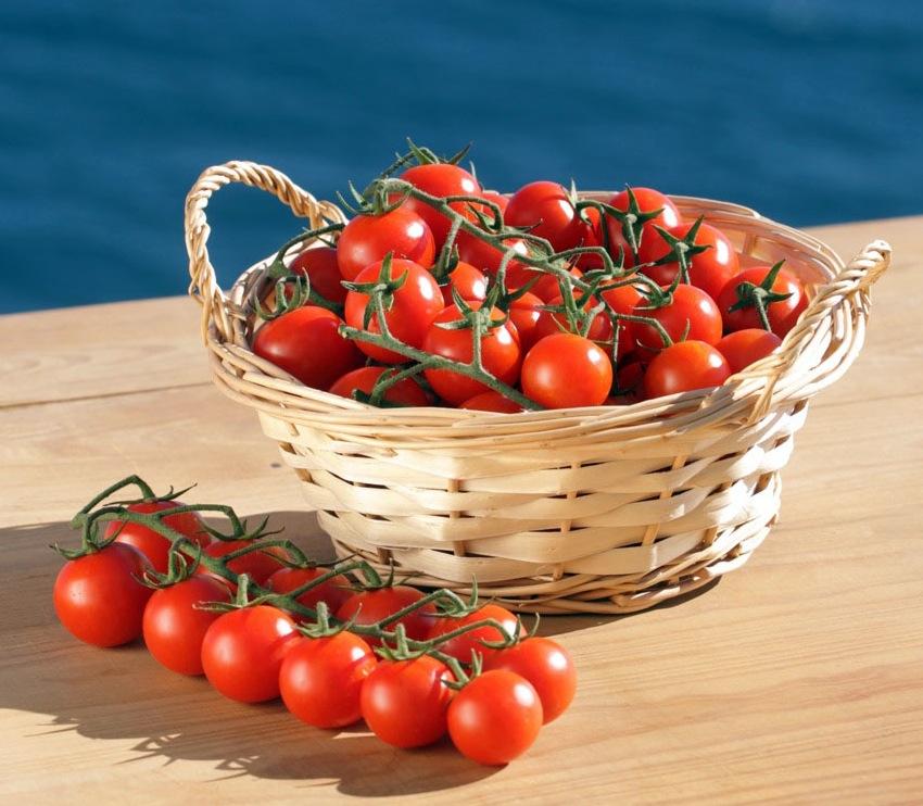 Planet Israel - Cherry Tomato